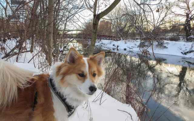 on the valley trail - Viggo looking for the ducks