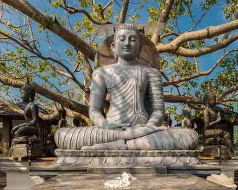 Seema Malaka's Bodhi Tree Buddha