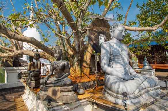 the Bodhi tree Buddha at Seema Malaka