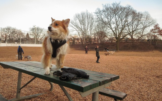 Viggo at Withrow Dog Park a week after the snow fall