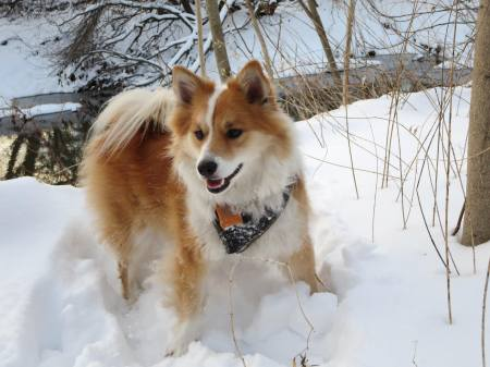 Viggo in the snow by the river