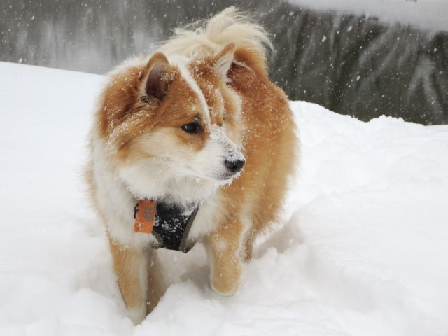 Viggo in the snow on the banks of the Don