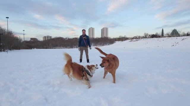 Viggo meets his buddy Clarence as we near the Broadview Hill