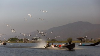 74. bird and boats on Inle Lake