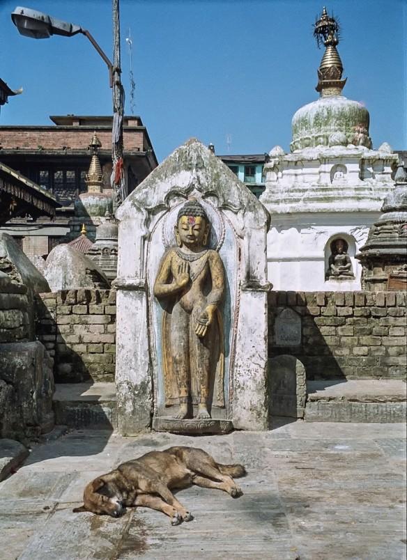 swayambhunath standing buddha and dead dog