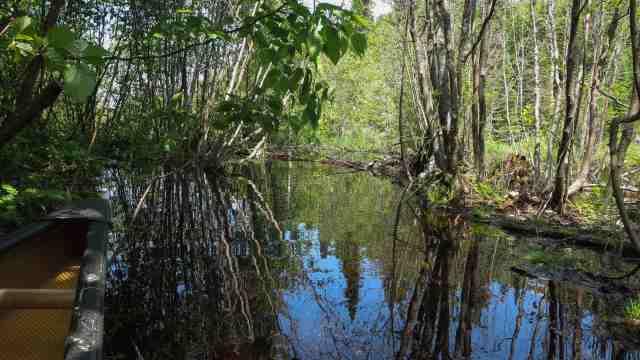 beaver dam before entering Cairngorm Lake