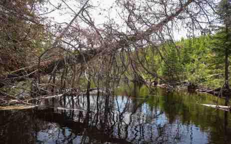 Steel River deadfall before Esker Lake