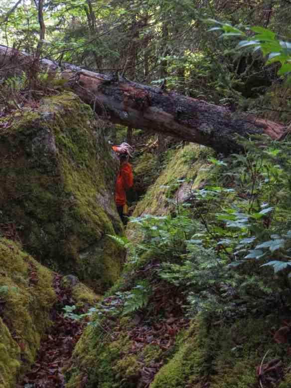 the log over the Diablo Portage