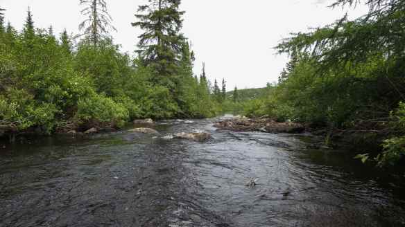 the top of SC07, the last rapids before Steel Lake