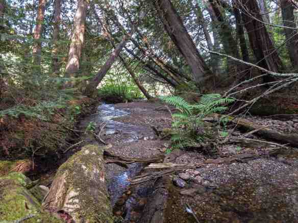 a return visit to the enchanted creek