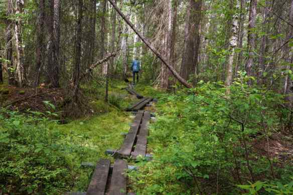 the board walk at the start of the Maple Mountain Trail