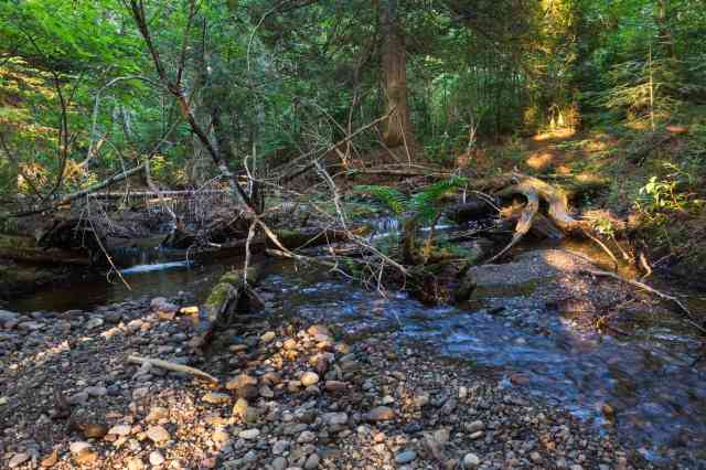 The Enchanted Creek - another look