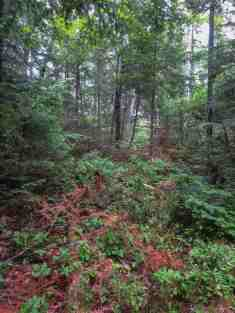 the mystery trail south of the Napoleon Portage