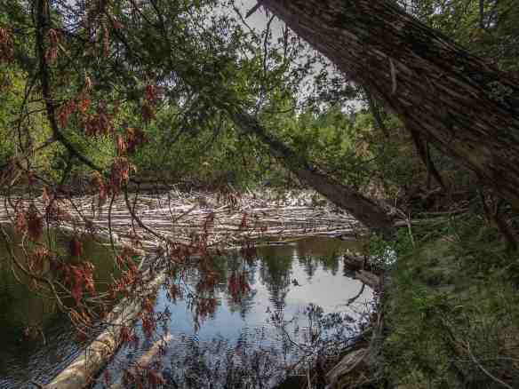 the top of the Steel River's final logjam