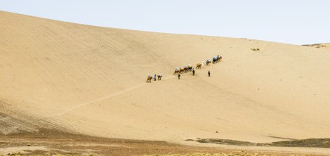 the donkey caravan on the way up