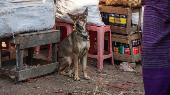 another dog surveys the scene