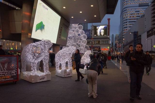 Polar Bears Display at Dundas Square
