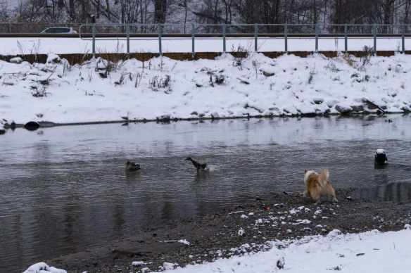 Viggo looking for some drama of his own on the Don River