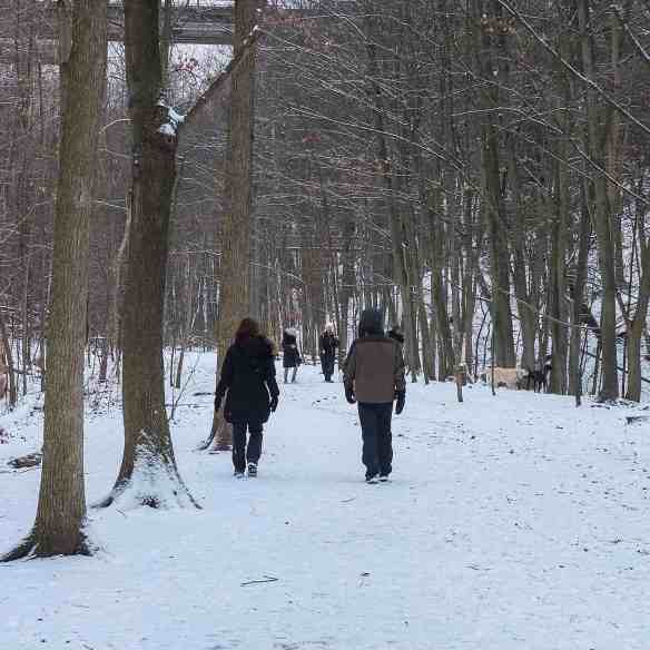 fellow dog walkers and their dogs down in the Moore Park Ravine