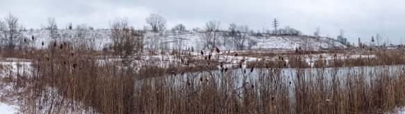 the Brickworks ponds and trails