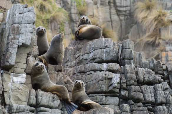 five fur seals look back at the creatures in the boat