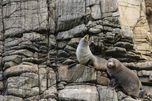 fur seals taking note of the visitors