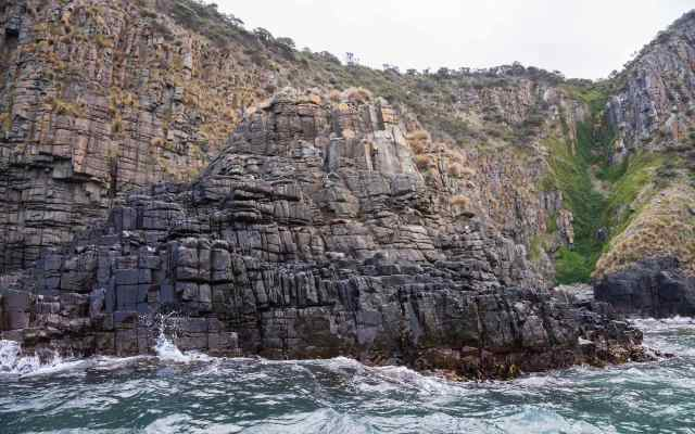 nine fur seals and a sea gull on the rocks of The Friars off Bruny island