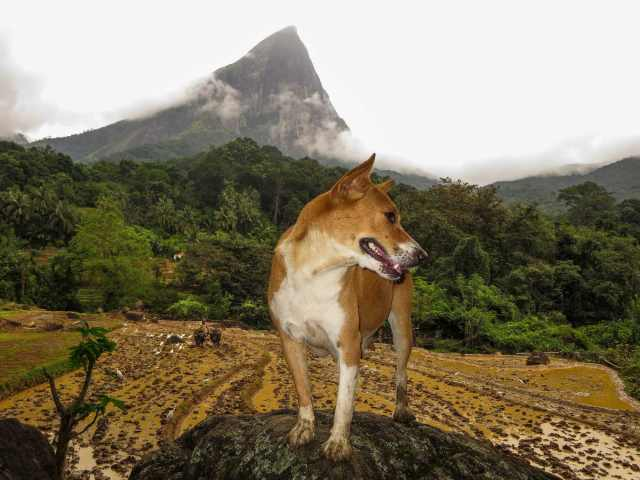 farm dog poses with Lakegala Mountain in the background