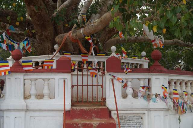the base of Aukana's Bodhi Tree shrine