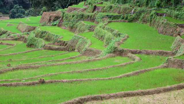 the terraced fields of Meemure village