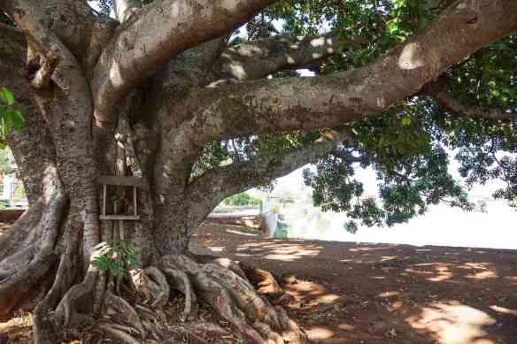 a tree shrine on the banks of Pone Taloke Lake in Pindaya
