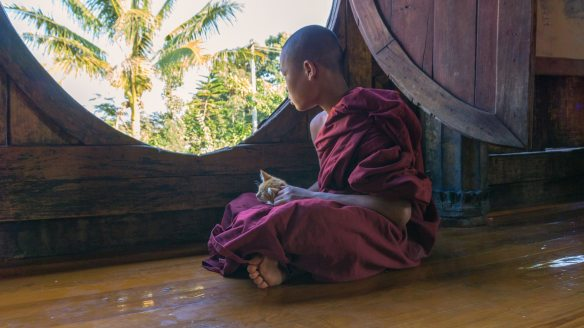 kitten snuggled in lap of novice monk at Shwe Yaunghwe Kyaung