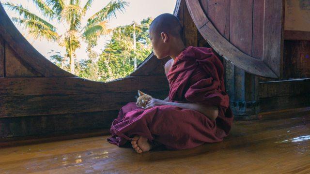 kitten snuggled in lap of novice monk at Shwe Yaunghwe Kyaung