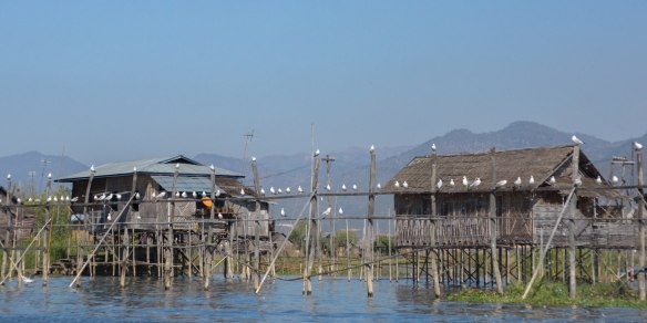 passing by a line of birds on Inle Lake