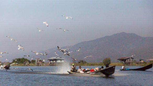 seagulls following local boats down Inle Lake