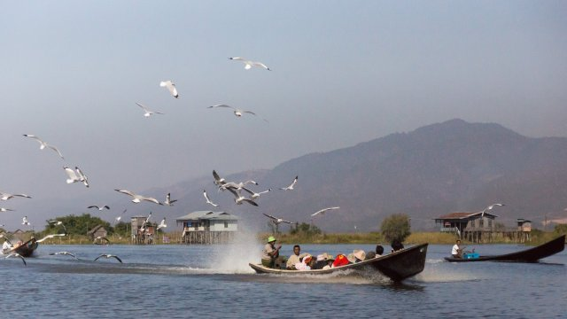 seagulls following local boats down Inle Lake