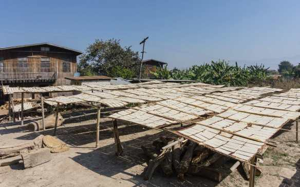 sheets of tofu out to dry at Khaung Daing cottage