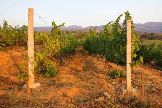 the iron oxide rich earth that gives the winery its name - Red Mountain Estate