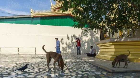 Botahtaung Pagoda terrace - dogs in the shade