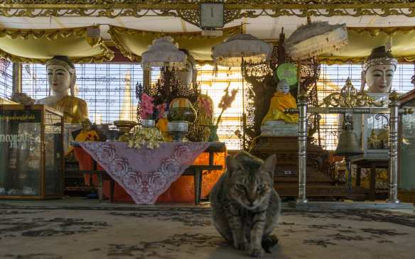 Botahtaung Paya shrine room with resident cat