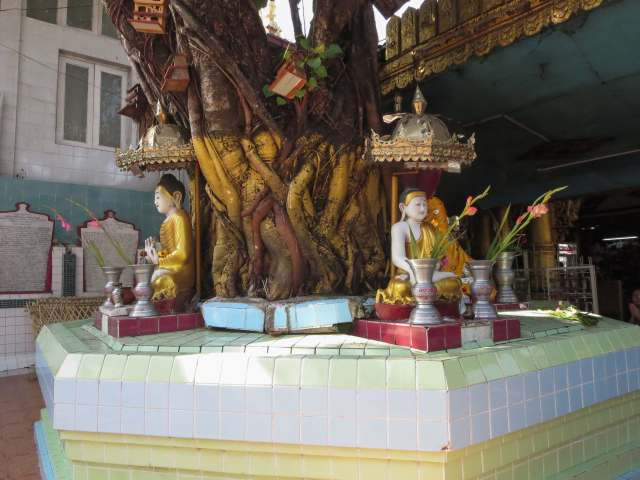 a Bodhi Tree at Sule paya