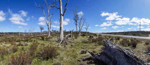 desolate fields in the Middlesex area near Cradle Mountain