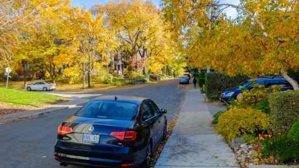 Hogarth Avenue fall leaves