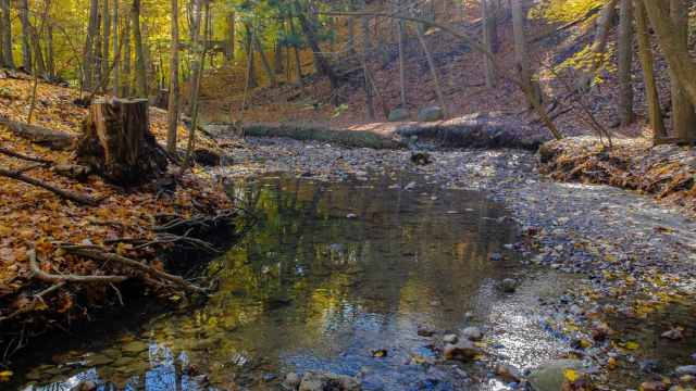 Mud Creek - fall view