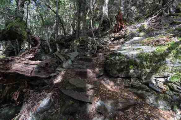 rough path above Dove Lake