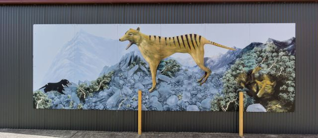 Sheffield Tasmania mural of Thylacine