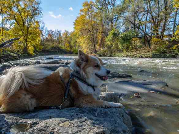 Viggo studying a set of Don River rapids south of Pottery Road