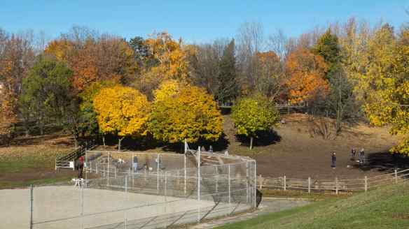 Withrow Park off-leash area for dogs