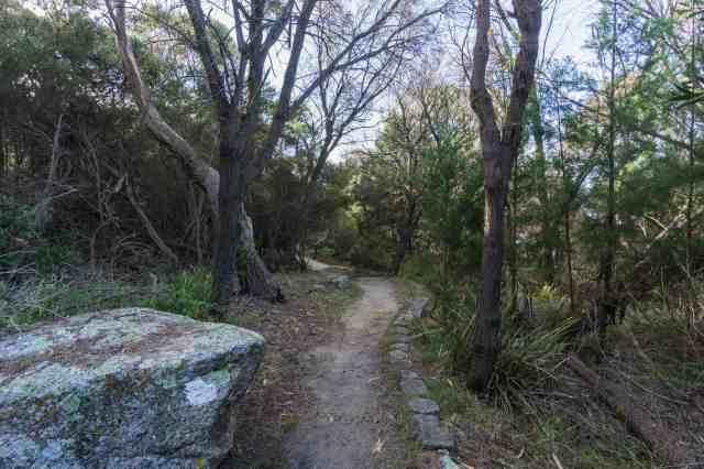 Bicheno trail above the beachfront