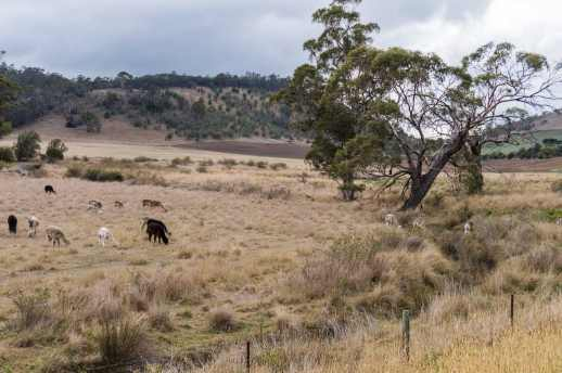 pastoral-scene-on-the-side-of-c350-on-the-way-to-buckland